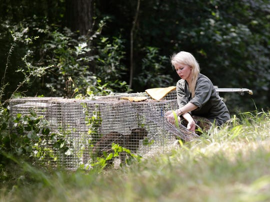 Pamela Kay Connery opens a cage to release a bobcat
