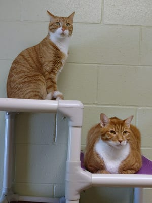 These two boys are ready to find their home with you.