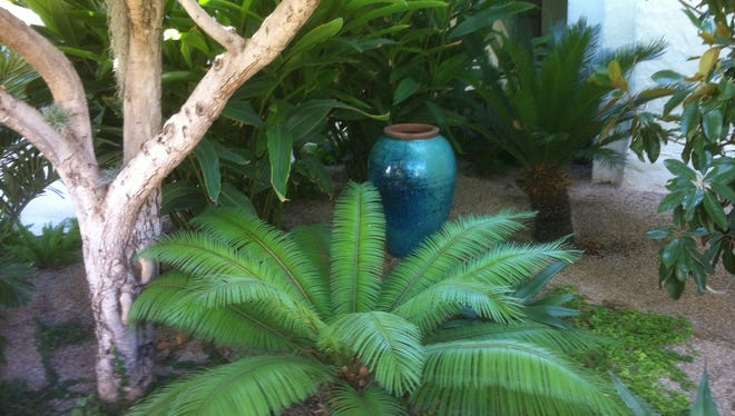 Cycads grow in well- drained soil in dappled shade, with about the same water required as an Aloe or Agave.