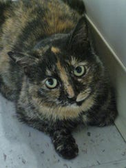 Erika is a 3-year-old petite tortie girl who was dropped