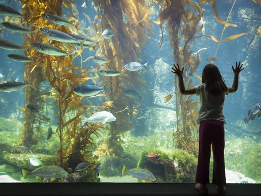 Last chance to vote for best aquarium for Best time to fish today