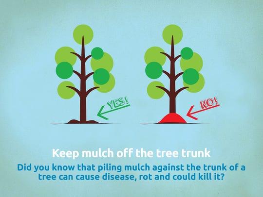 """Tree tip: No """"volcano"""" mulching around the trunk."""