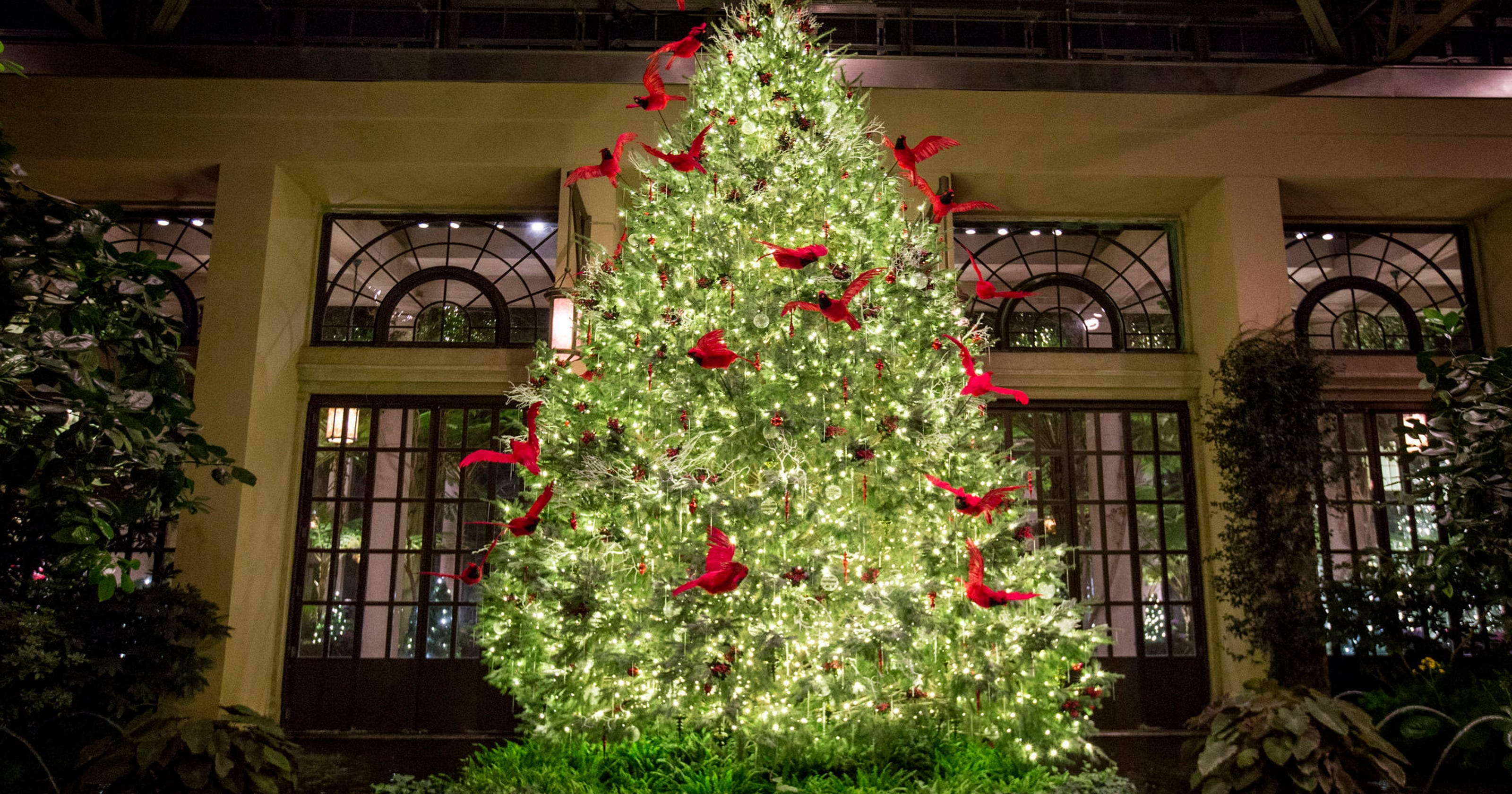 A Longwood Christmas sets a record number of daily visitors