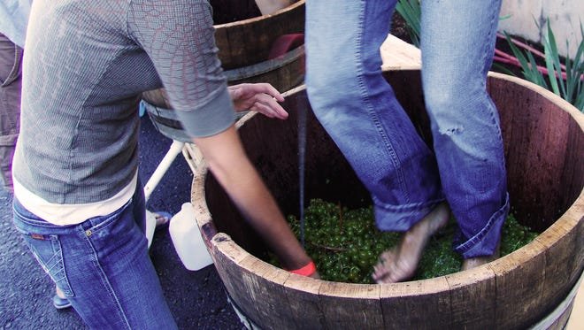 A swabbie clears the way for a stomper. The annual Oregon Grape Stomp Competition and Harvest Celebration happens 11 a.m. to 6 p.m. Sept. 24 and 25 at Willamette Valley Vineyards.