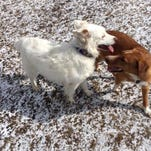 Stingl: Two dogs from the same rescued litter from Alabama are reunited by chance at Nashotah Park