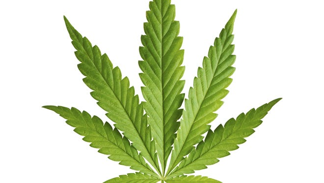 A Quinnipiac University poll found that 62 percent of New Yorkers wouldn't use marijuana for personal use if it were legal.