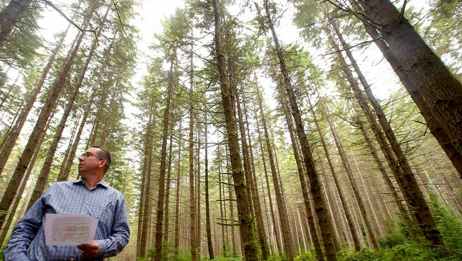 FILE PHOTO - Adrian Miller, with the former timber company Pope Resources, stands on one of the trails in the Port Gamble Forest Heritage Park.