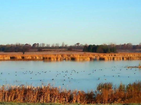 duck ponds.jpg