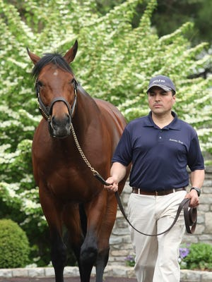 American Pharoah is walked on the grounds by Rodolfo Gomez Ornelas at the Ashford Stud farm in Versailles, Ky. on Thursday morning. The Triple Crown winning horse has been at the property since Nov. 2 of 2015 and the staff reports a sharp increase in visitors. April 21, 2016