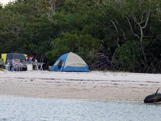 Two dead dolphins lie near a campsite on a remote beach