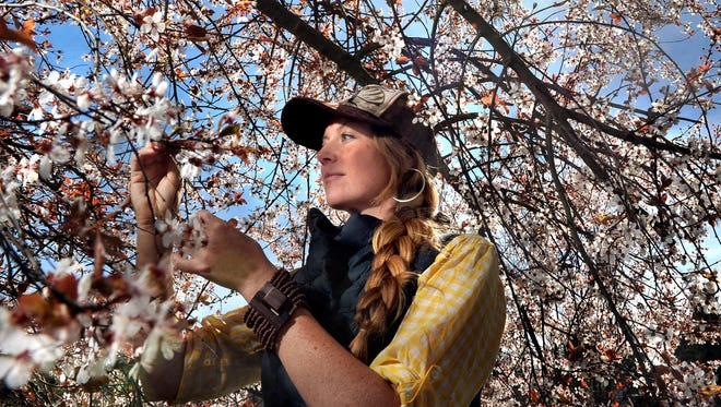 Bee expert Sarah Red-Laird looks at early flower and orchard bloom on Thursday, March 12, 2015 in Medford, Ore.