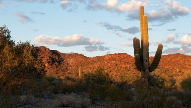 The Sonoran Desert, northwest of Tonopah.