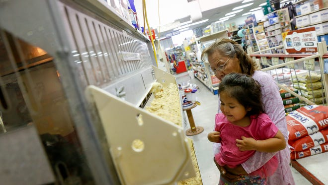 Gloria Largo lifts her granddaughter Shandian Curely to look at the chickens Tuesday at the Farmington IFA Country Store. City officials are considering an ordinance change that would allow residents to keep up to six chickens on their property.