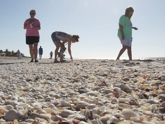 Learn from a naturalist about shelling and what you'll
