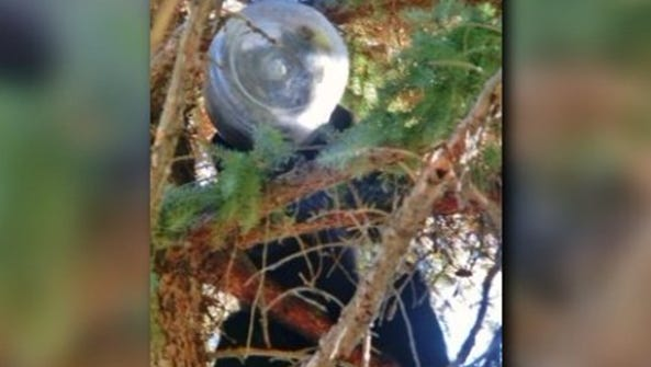 A bear got a Cheese Balls container stuck over its
