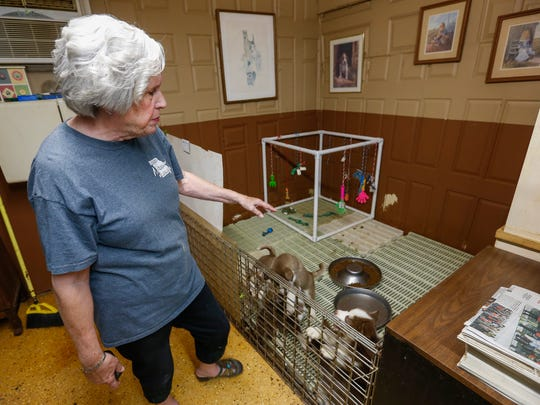 Ann Quinn talks about the Husky puppies that are playing inside an open pen at her breeding room in Niangua on Thursday, May 31, 2018.