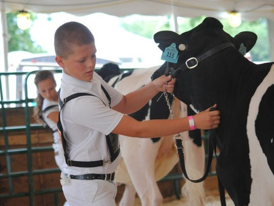 Hunter exhibits his heifer at the Kewaunee County Fair.