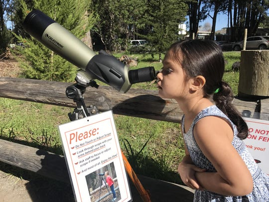 Edie Rose Woomer looks through a telescope at a monarch butterfly colony in Pismo Beach.