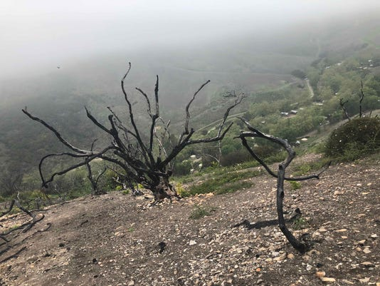 Charred remains of the Thomas Fire