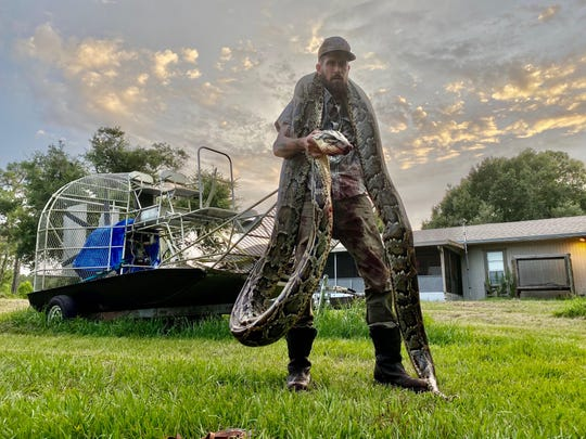 South Florida Water Management District python hunter Mike Kimmel with an estimated 17-foot python he captured June 8 in the Everglades. Kimmel, of Martin County, owns Martin County Trapping and Wildlife Rescue. Photo courtesy Mike Kimmel