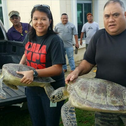 Man, 32, charged for allegedly taking turtles
