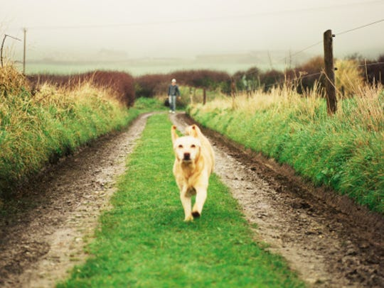 Dog running on a trail outdoors