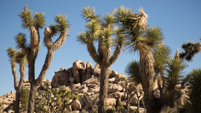 Joshua Tree National park has three visitors centers (open year-round) and a nature center (open seasonally) to help you get the lay of the land within the park.