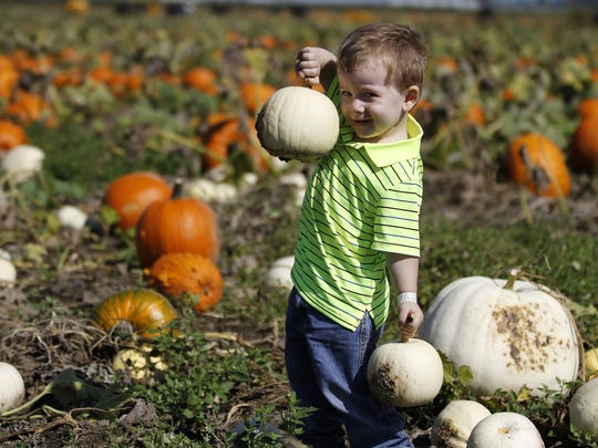 Jackson Plueard of Salem, pauses for a photo while looking for pumpkins with his family at Bauman's Farm and Garden in 2014.