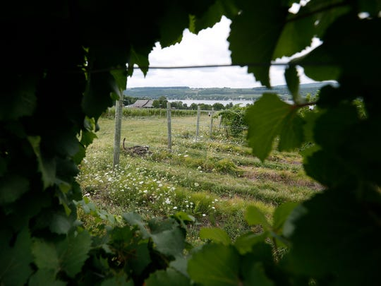 A view from Rooster Hill Vineyards in the Finger Lakes