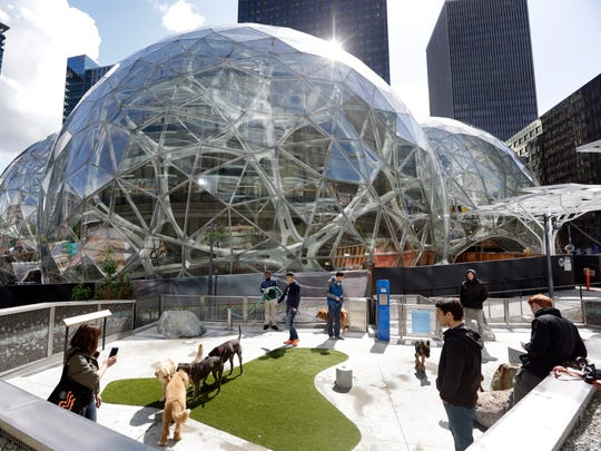 Amazon employees tend to their dogs in a canine play