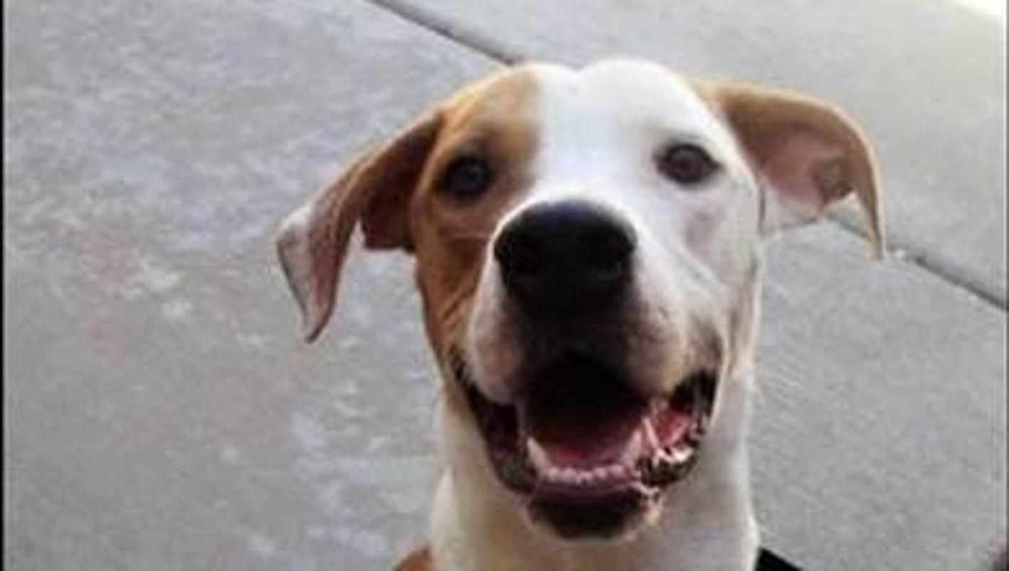 Search Rescue Dogs Az