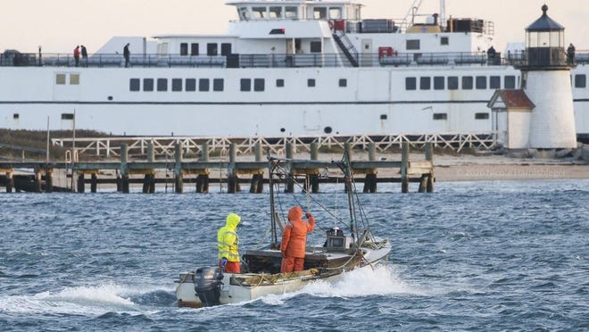 Scallopers head out into Nantucket Harbor Monday morning on the first day of commercial scalloping season.