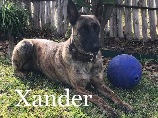12.05.17_SAPD Xander