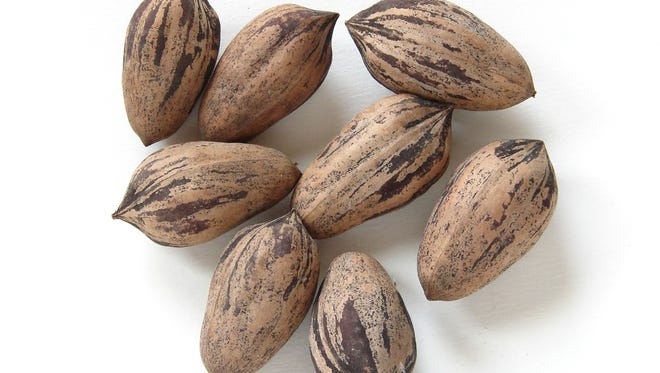 Chris Schurtz will discuss the state of New Mexico's pecan industry at 7 p.m. on Thursday at the New Mexico Farm and Ranch Heritage Museum.