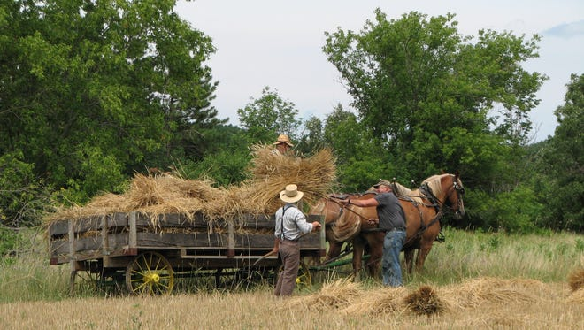 Ron Luebke and John Hanson pitch bundles of grain onto a horse drawn wagon at Old World Wisconsin.
