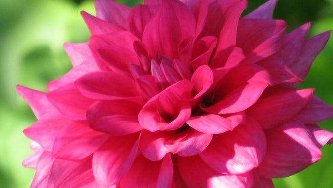 Get ready for summer gardening by marking the calendar for a local seminar or plant sale.
