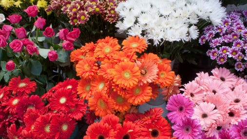 Variety of colourful flower bouquets