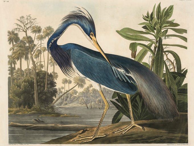 """Drawn to Nature,"" an exhibit of 75 John James Audubon"