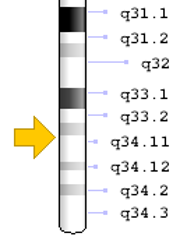 The location of the STXBP1 gene on chromosome 9. Blake Ferrell, who competes in triathlons with his father, suffers from seizures and development issues related to the deletion of this gene.