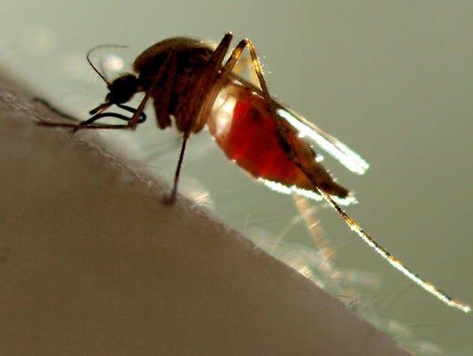 1 file photo mosquito