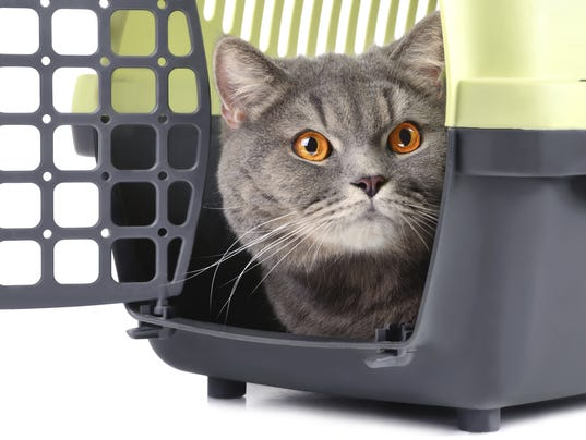 how to get a feral cat in a carrier