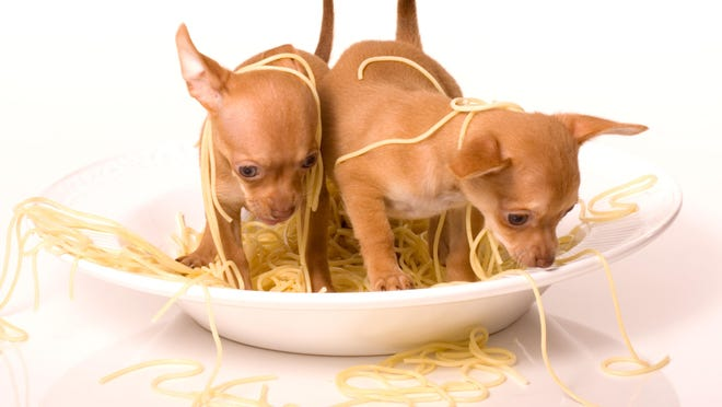 Help control the pet population with the Humane Society's annual Spay-ghetti Dinner Oct. 28.
