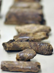 Bones of a mastodon lie tagged and organized during