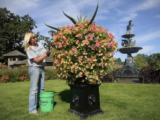 Gardens Supervisor Nia Primus deadheads flowers in one of the large urns Sept. 10 at Clemens Gardens in St. Cloud.