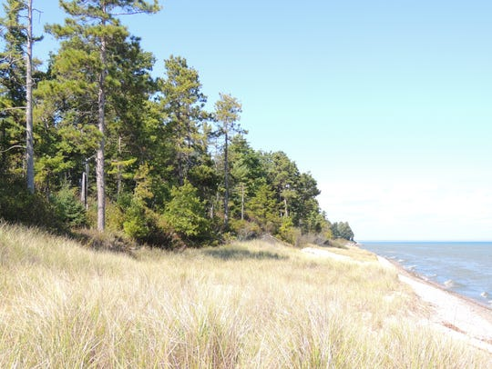 Point Beach State Forest features rolling sand dunes,