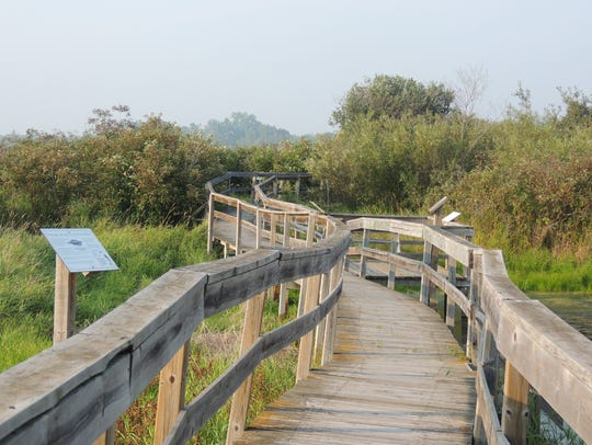 Elevated boardwalk trails lead through many areas of