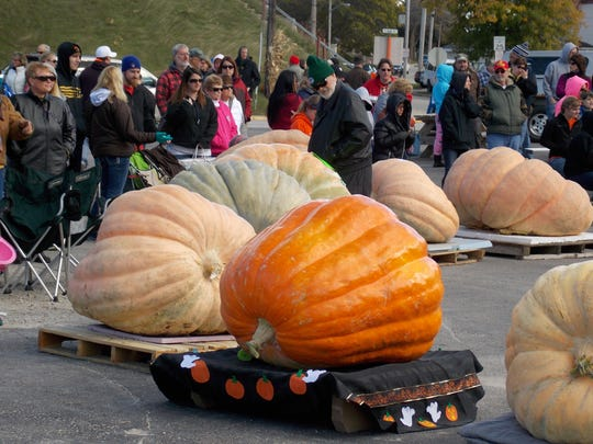 File - Giant pumpkins were on display during Mishicot's Pumpkinfest celebration in 2015. The biggest pumpkin, weighing in at 1,630 pounds, was entered by Tracy Carter, of DePere, and a new state record was recorded for a giant squash – 1,183 pounds - grown by Ken and Jesse Williamson, of Marion.