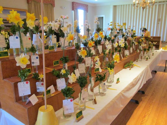 The Somerset County Garden Club Daffodil Show is is April 7, 2018. Event is free and open to the public.