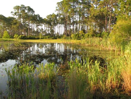 Sea level rise will impact coastal freshwater wetlands.