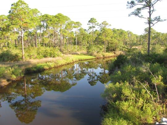 Coastal slash pine forest is vulnerable to sea level rise.
